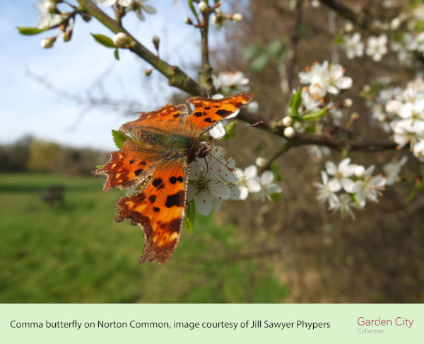 norton common- Jills photo (ID 41821)
