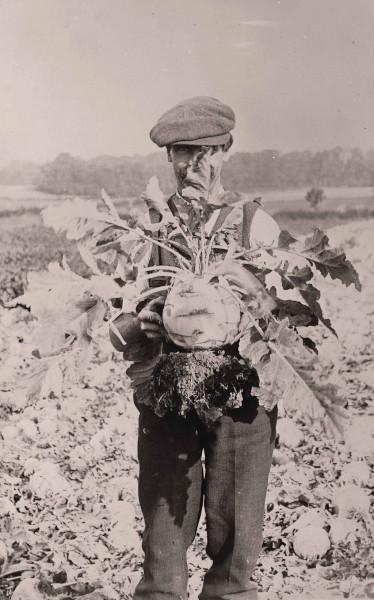 Farming (ID 37266)