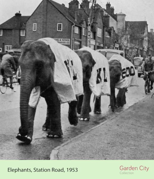 k and l elephants (ID 41819)